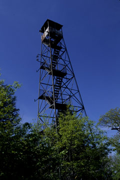 A fire tower rises above the forest canopy
