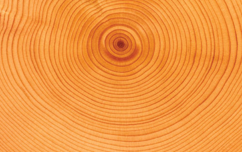 A cross-section through a log showing growth rings