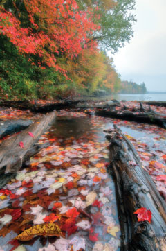 Autumn leaves in the water between fallen logs at the edge of a lake