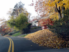 A big pile of leaves along side a road in a residential area