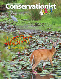 The cover of the habitat issue of Conservationist for Kids magazine