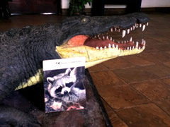 A Conservationist Magazine leans against a stuffed alligator