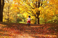 A young boy rides a tricycle along a leaf-covered path by trees with bright yellow foliage