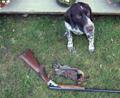 A German shorthaired pointer sits in the grass by a rifle and dead bird