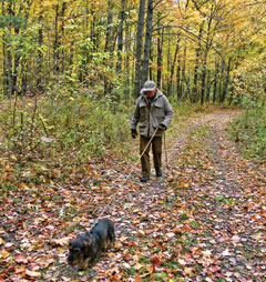A man with a tracking dachshund on a leash walking through the woods on a path