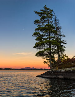 A white pine at the edge of a lake withthe sun setting in the distance