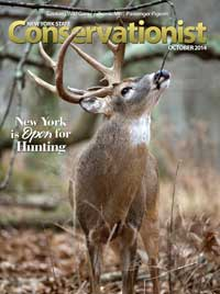 Conservationist Magazine