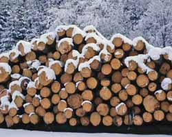 A winter woodpile