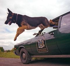 K-9 unit dog Paws jumps from the front seat of a police car