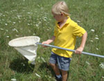 A young, blond boy with a butterfly net, standing in the grass