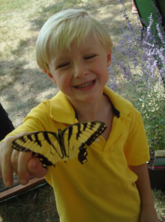 A young boy in a yellow shirt holding a yellow and black butterfly