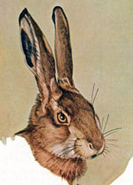 A painting of the head of a European hare