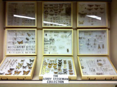 Nine glass cases containing mounted insects