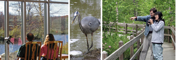 A great blue heron and people watching wildlife