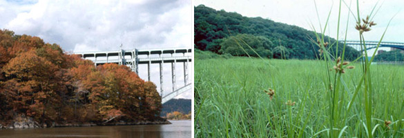 Images of Inwood Hill Park in fall and of salt marsh in summer