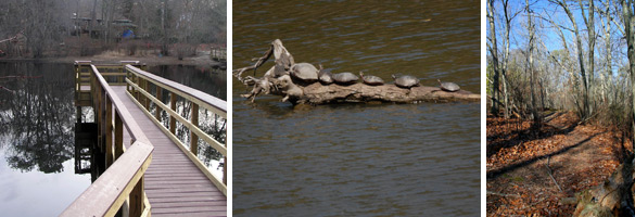 Images of the wildlife viewing platform, turtles,and trails at Ridge ECA