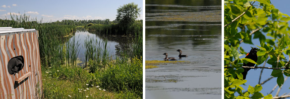 Images of wetlands, waterfowl and wildlife at Oak Orchards and Tonawanda