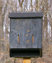 bat box example