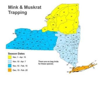 Map of NY showing Mink and Muskrat trapping season dates