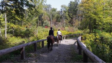 two people riding horses on a trail