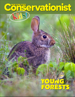 The Young Forests issue features a photo of an eastern cottontail by Thomas D. Lindsay