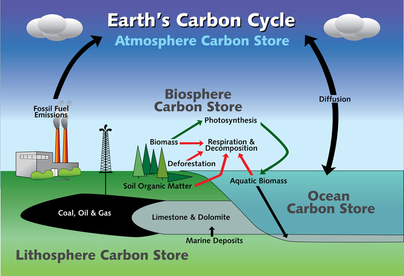 NYSDEC - Large Diagram Illustrating the Earth's Carbon Cycle