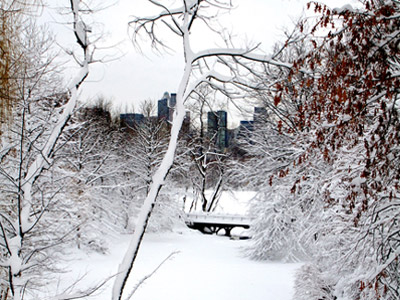 Snow covered trees in Central Park