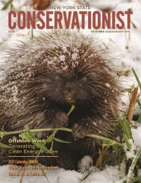 The front cover of the December 2020/January 2021 issue of Conservationist features a porcupine
