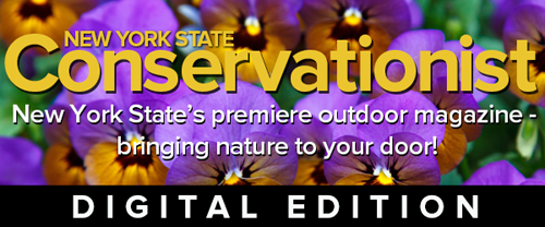Conservationist digital issue banner image featuring flowers