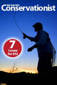 Conservationist promotion 7 issues for $12