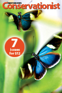 Conservatioist promotion - seven issues for $12