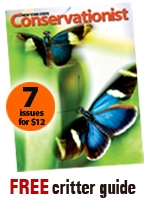 Conservationist promo ad with two butterflies