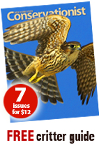 Conservationist magazine promotion - seven issues for $12