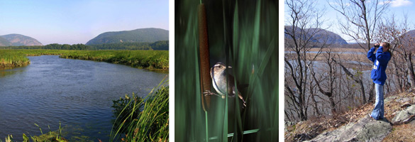 View of Constitution Marsh, a marsh wren, and a visitor taking in the view of the marsh