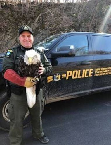 ECO stands in front of his vehicle while holding injured bald eagle