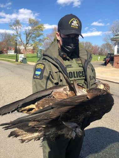 ECO holding deceased bald eagle