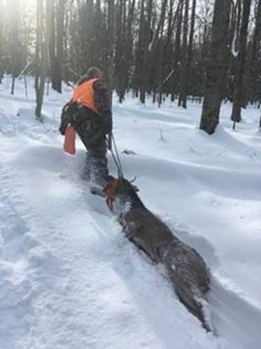 Hunter dragging deceased deer through the snow in the woods