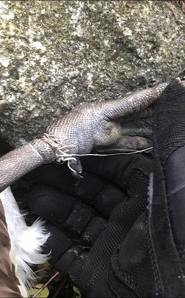 Goose foot with string around it