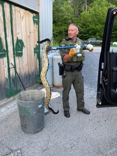 ECO holding a large rattle snake with a grabber