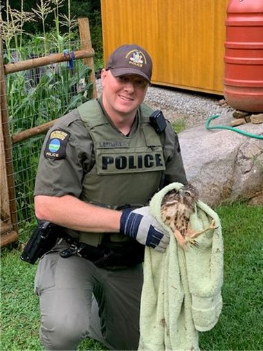 ECO holding hawk in a towel before release