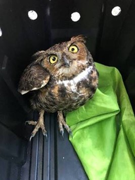 Owl standing in an open container