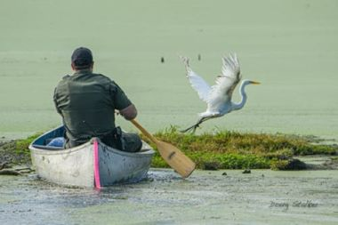 ECO paddling towards injured bird, which is trying to fly away