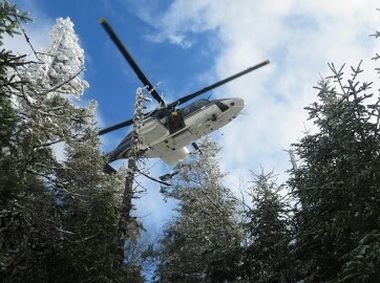 View through trees looking up at hovering helicopter