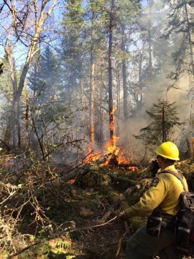 Forest ranger stands at edge of wildfire in the woods