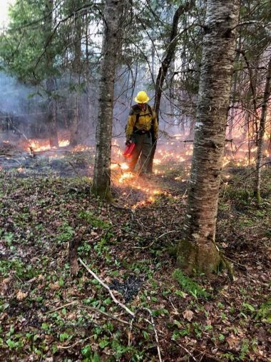 Forest Ranger walking through a fire-ridden forest floor while using extinguisher