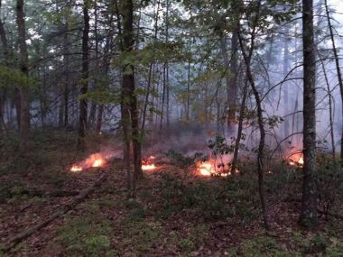 Photo of smouldering fire in the woods