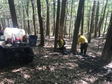 Forest Rangers in woods dousing hot spots from fire with water