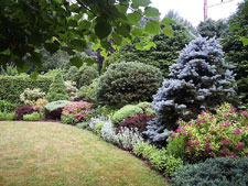 A garden of shrubs and perennials