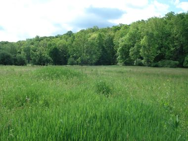 field with tall grass and a line of trees in the background