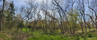 Many bare trees and some trees with leaves in a field of green grass